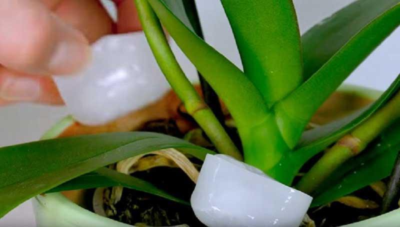 7 astuces géniales pour rendre vos plantes encore plus belles