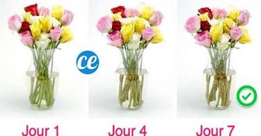 Comment Faire Durer Un Bouquet Plus Longtemps ? L