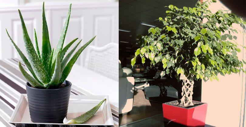 5 plantes à mettre dans la chambre pour passer une nuit agréable